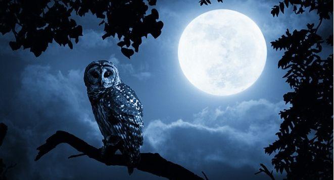 Влияние луны на человека — ASTROLOG CENTER
